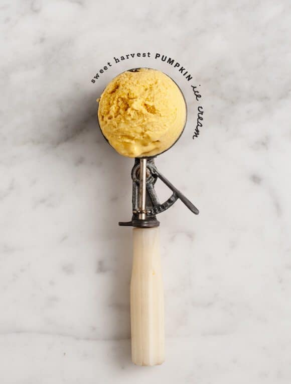 Sweet Harvest Black Tea Pumpkin Ice Cream