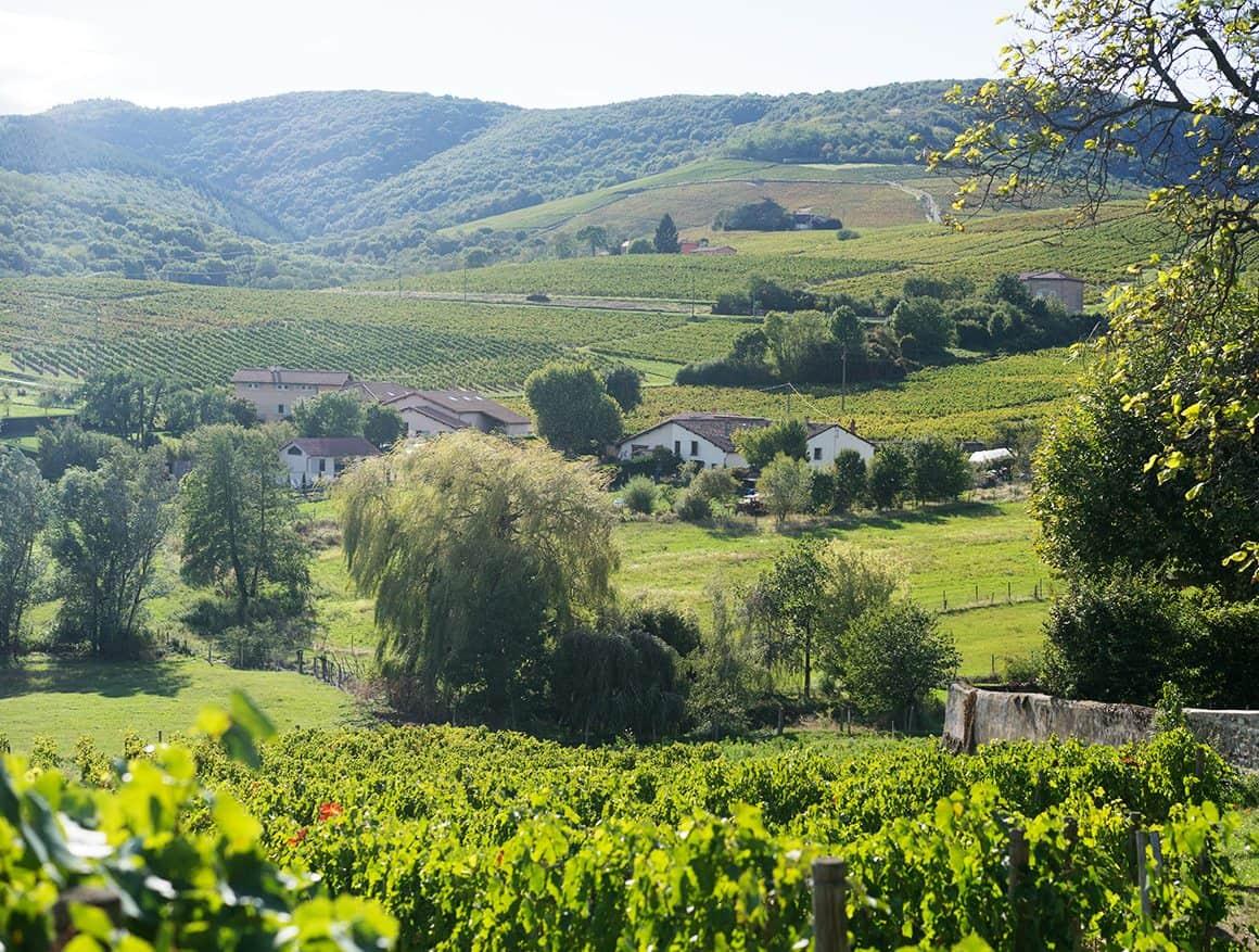 Our Trip to Beaujolais - Love & Lemons