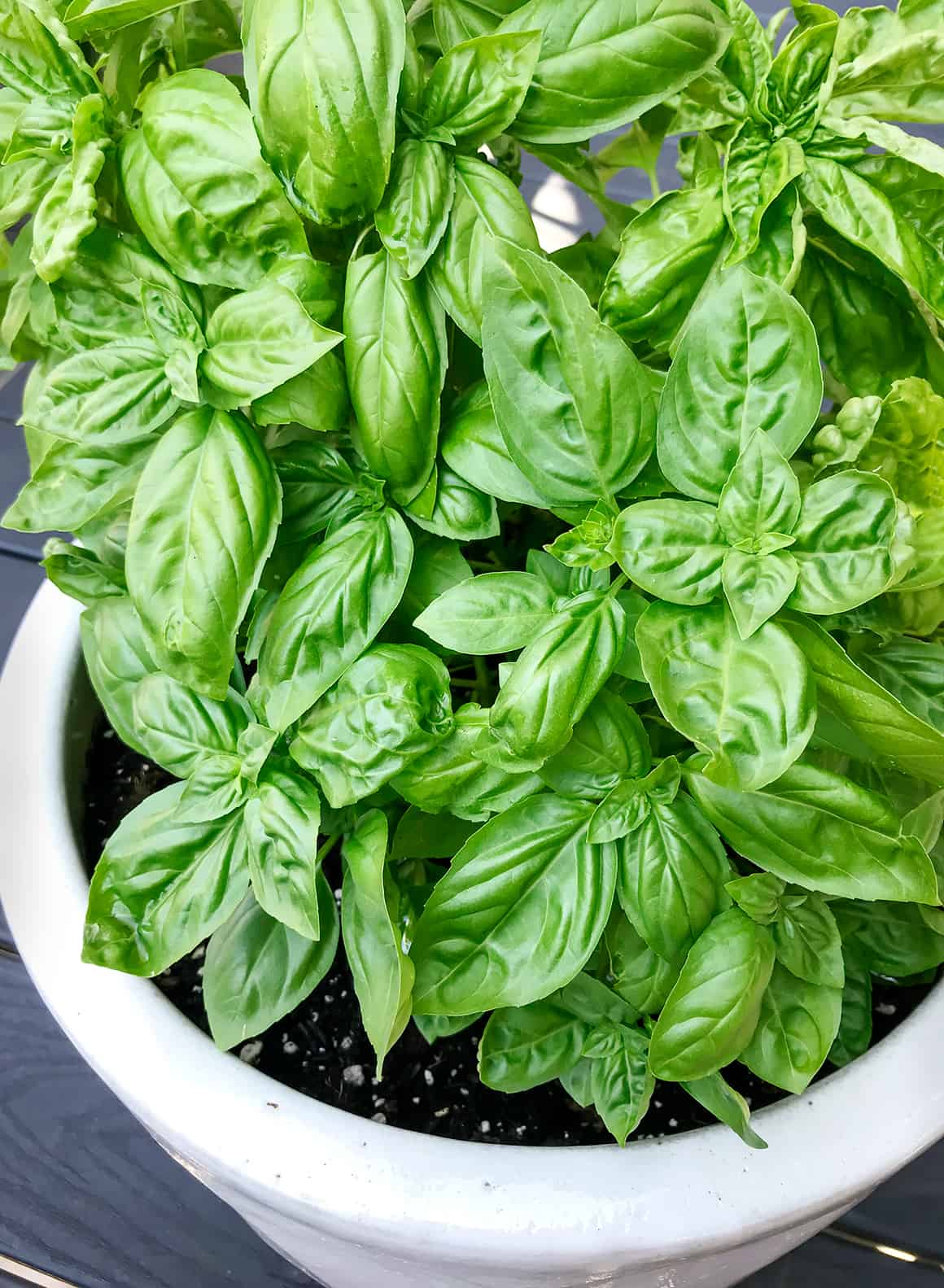 Basil 101 Growing Tips 28 Recipes Love And Lemons
